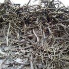 tangled plant 2